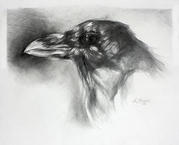 Raven Drawing - Raven Head by Derrick Higgins