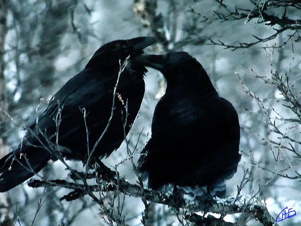 Photograph - Raven Love Chat by Colette V Hera  Guggenheim