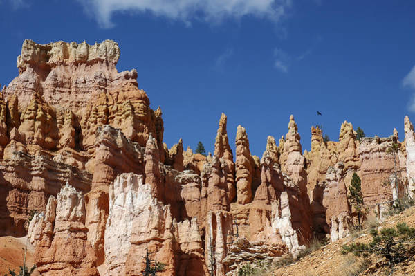 Photograph - Raven Over Bryce Canyon by Lee Kirchhevel