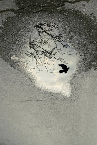 Gloomy Wall Art - Photograph - Raven Reflection by Cambion Art