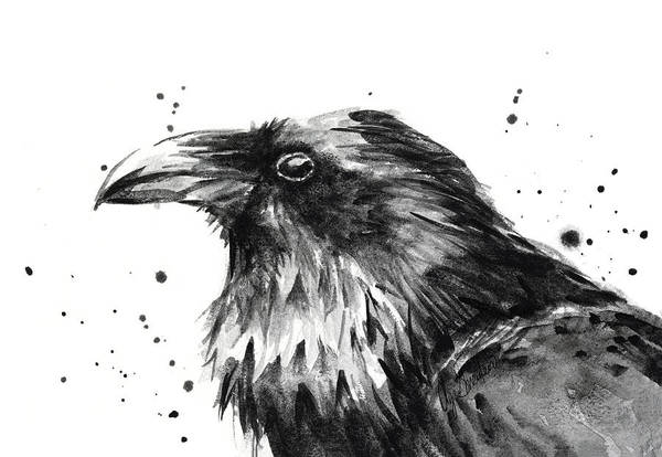 Bird Watercolor Painting - Raven Watercolor Portrait by Olga Shvartsur