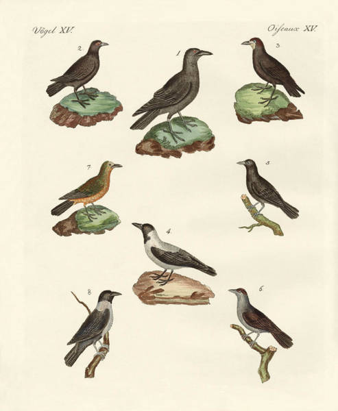 Raven Drawing - Ravens Crows And Daws by Splendid Art Prints