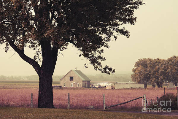 Wall Art - Photograph - Rawdon's Countrylife by Aimelle
