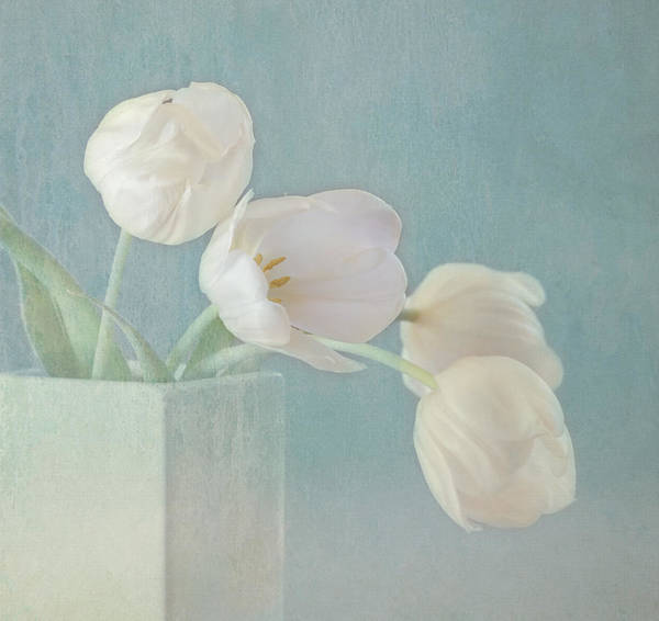 Wall Art - Photograph - Ray Of Beauty by Kim Hojnacki