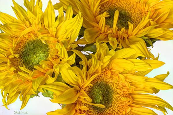 Sunflower Seeds Photograph - Rays Of Sunshine by Heidi Smith