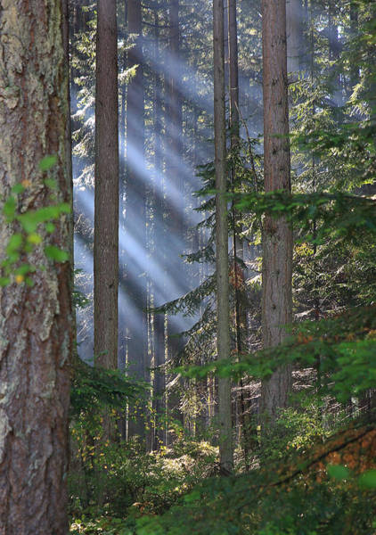 Photograph - Rays by Randy Hall