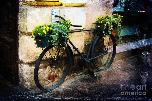 Photograph - Re-cycle by Randi Grace Nilsberg