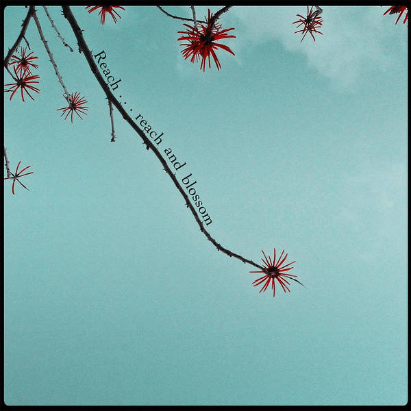 Photograph - Reach And Blossom by Kevin Bergen