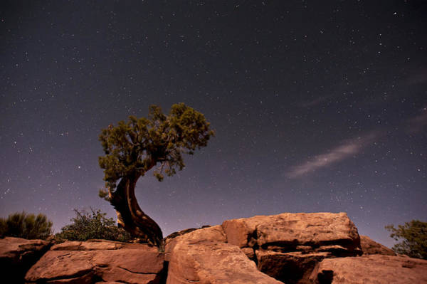 Photograph - Reach For The Stars by Melany Sarafis