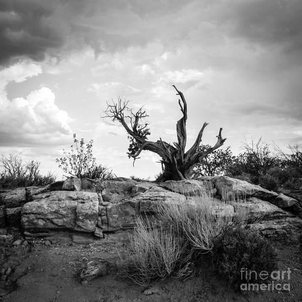 Photograph - Reaching Bw by Cheryl McClure