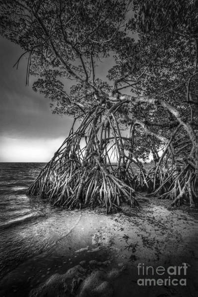 Palmetto Photograph - Reaching For Earth And Sky-bw by Marvin Spates