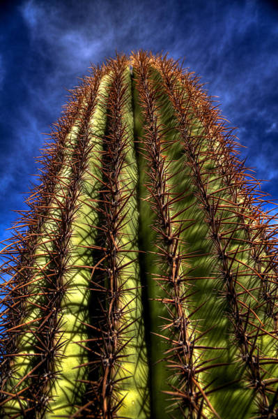 Photograph - Reaching For The Sky by David Patterson