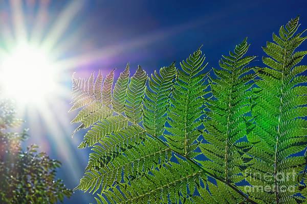 Reach For The Sky Wall Art - Photograph - Reaching For The Sun By Kaye Menner  by Kaye Menner