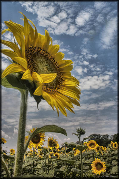 Photograph - Reaching For The Sun by Erika Fawcett