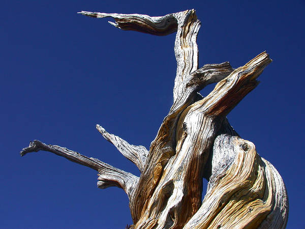Photograph - Reaching Out by Shane Bechler