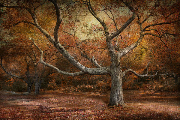 Photograph - Reaching Out by Robin-Lee Vieira