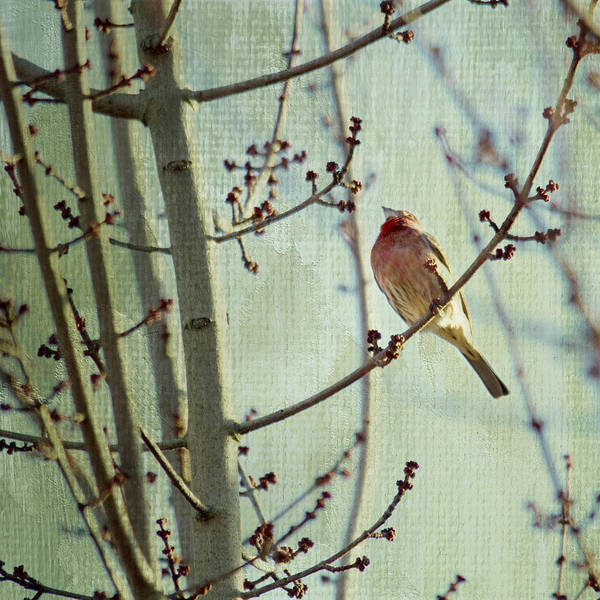Finch Photograph - Ready For The Day by Rebecca Cozart