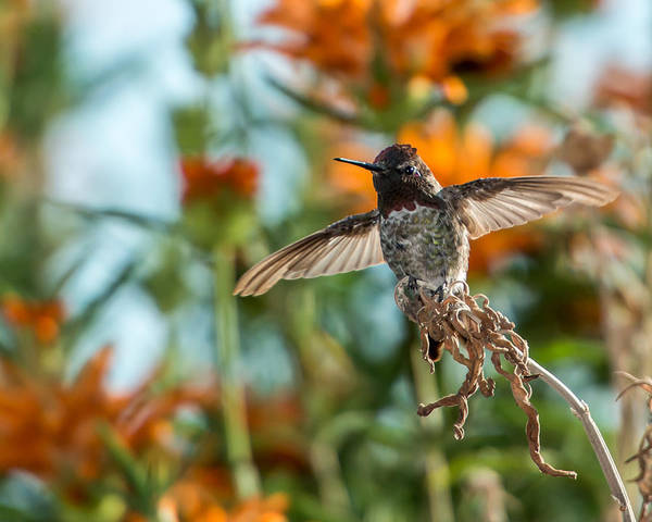 Photograph - Ready To Fly by Paul Johnson
