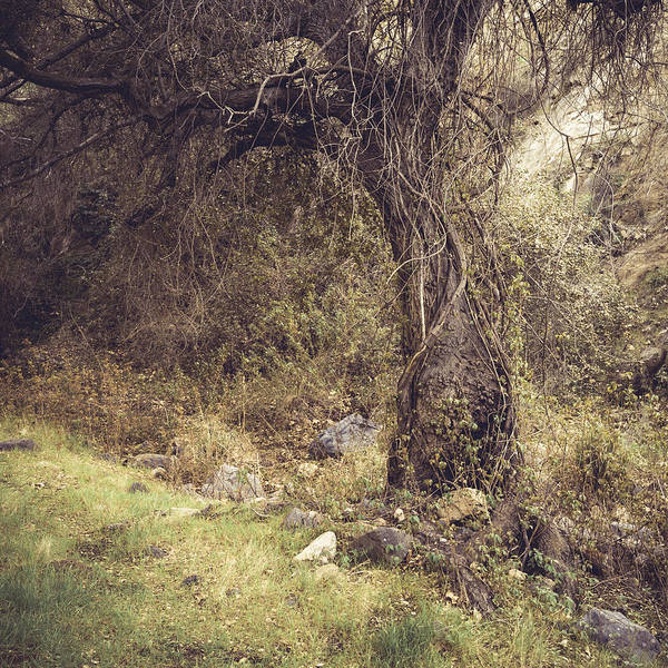 Coast Live Oak Photograph - Realm Of The Ancients by Alexander Kunz