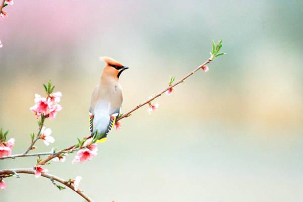 Rear View Of Bird Perching On Branch Art Print