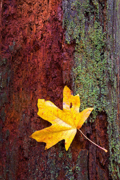 Leafs Wall Art - Photograph - Reclamation by Mike  Dawson