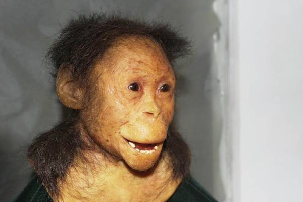Wall Art - Photograph - Reconstructed Australopithecus Afarensis by Photostock-israel/science Photo Library