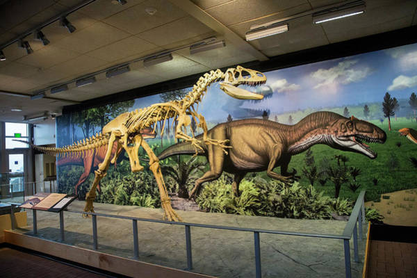 Dinosaur National Park Photograph - Reconstruction Of Allosaurus by Jim West