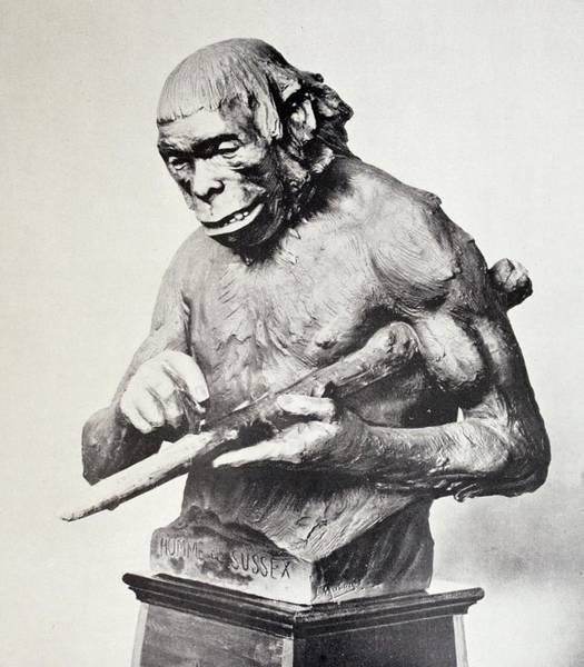 1912 Photograph - Reconstruction Of Piltdown Man by Paul D Stewart