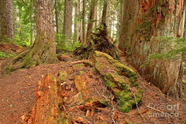 Photograph - Recycling In The Cheakamus Rainforest by Adam Jewell