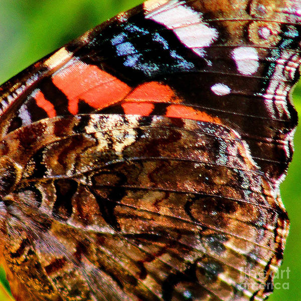 Photograph - Red Admiral Butterfly Wing Square by Karen Adams