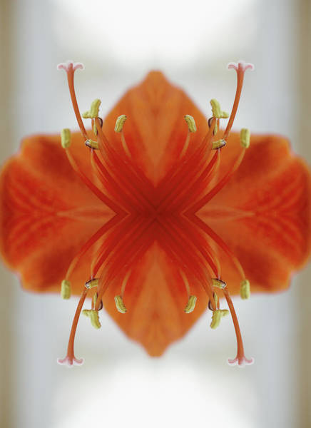 Vertical Photograph - Red Amaryllis Flower by Silvia Otte
