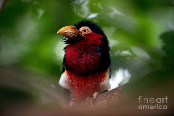 Photograph - Red And Black by Jaroslaw Blaminsky