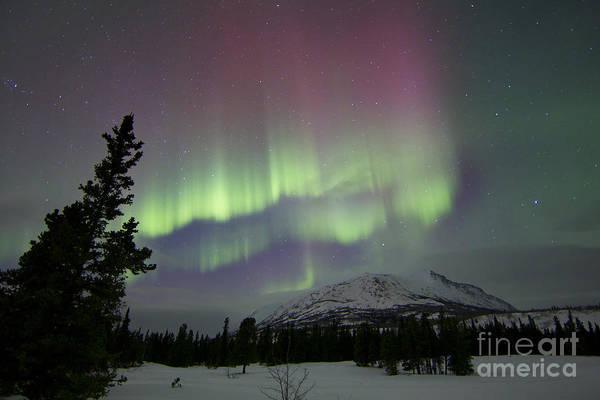 Photograph - Red And Green Aurora Borealis by Joseph Bradley