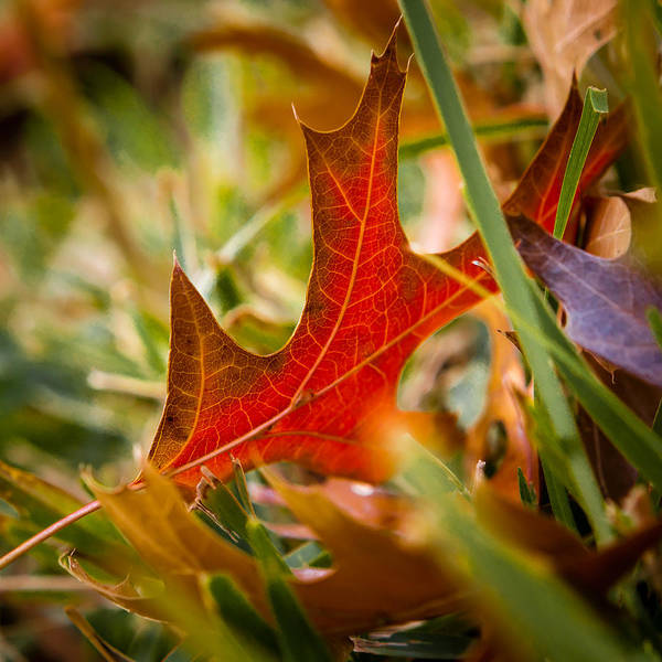 Photograph - Red And Green by Melinda Ledsome
