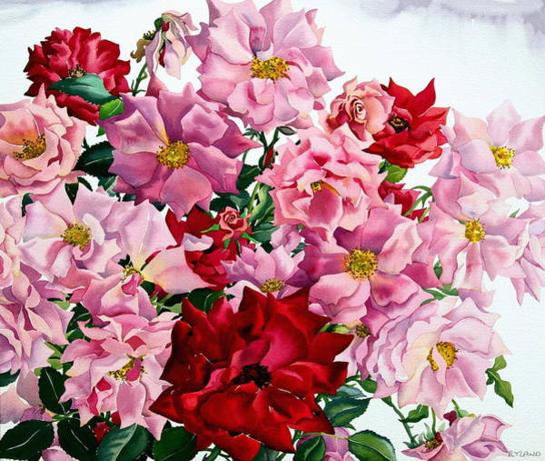 Wall Art - Painting - Red And Pink Roses by Christopher Ryland
