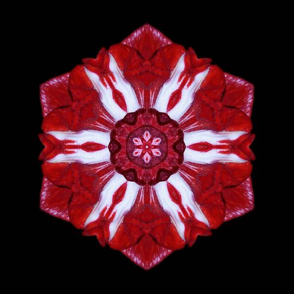 Photograph - Red And White Amaryllis Iv Flower Mandala by David J Bookbinder