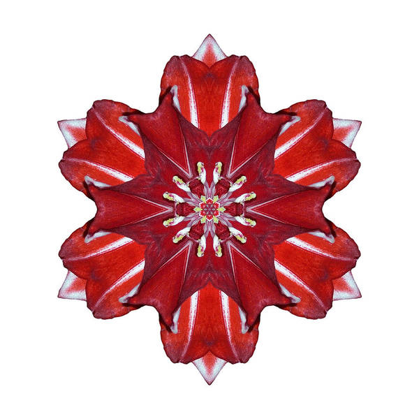 Photograph - Red And White Amaryllis Vii Flower Mandala White by David J Bookbinder