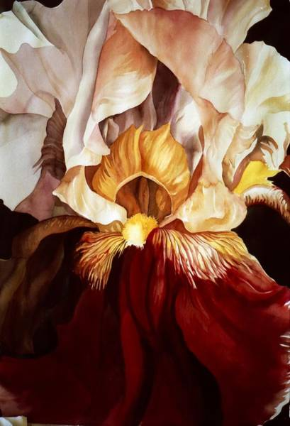 Painting - Red And White Iris by Alfred Ng