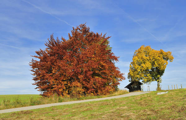 Photograph - Red And Yellow Autumn Colors - Beautiful Trees In Fall by Matthias Hauser