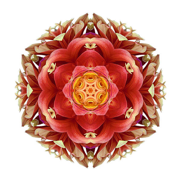 Photograph - Red And Yellow Dahlia IIi Flower Mandala Whtie by David J Bookbinder