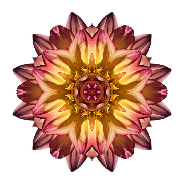 Photograph - Red And Yellow Dahlia Iv Flower Mandala White by David J Bookbinder