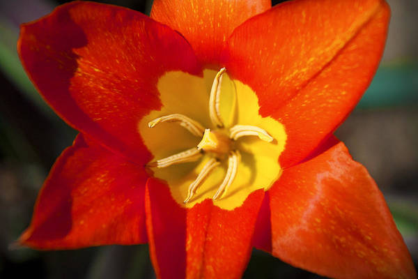 Photograph - Red And Yellow In Nature by Milena Ilieva