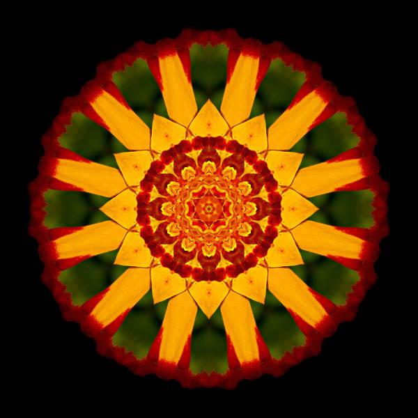 Photograph - Red And Yellow Marigold V Flower Mandala by David J Bookbinder