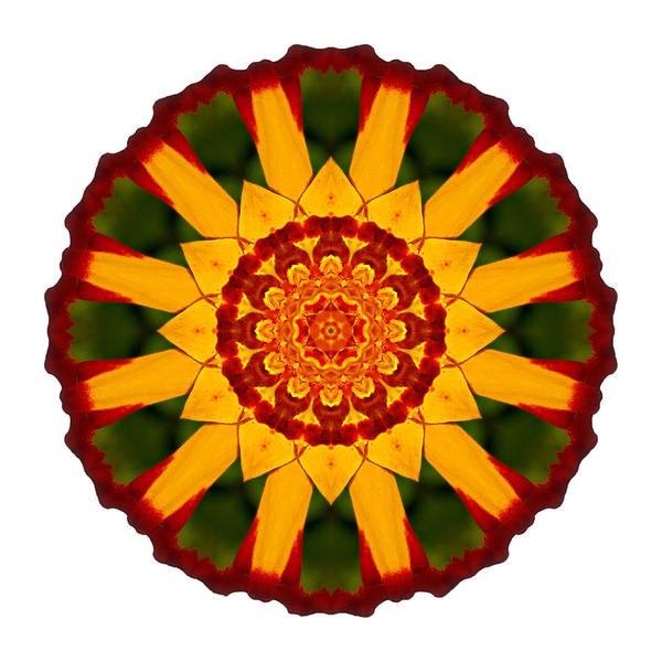Photograph - Red And Yellow Marigold V Flower Mandala White by David J Bookbinder