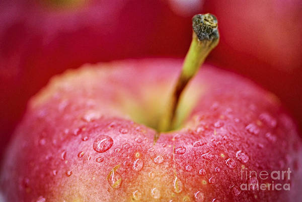 Wall Art - Photograph - Red Apple by Elena Elisseeva