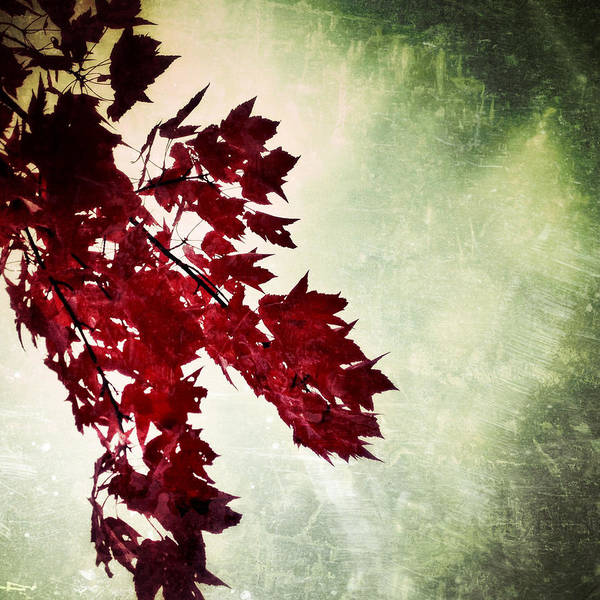 Photograph - Red Autumn Leaves by Natasha Marco
