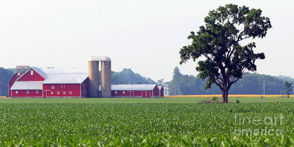 Wall Art - Photograph - Red Barn And Cornfield  8423 by Jack Schultz