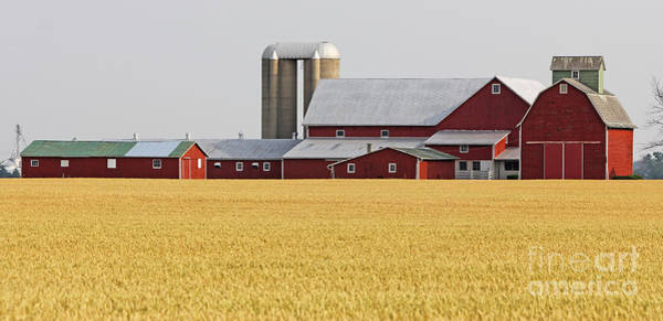 Wall Art - Photograph - Red Barn And Wheatfield  8419 by Jack Schultz