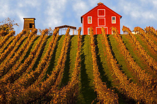 Wine Photograph - Red Barn In Autumn Vineyards by Garry Gay