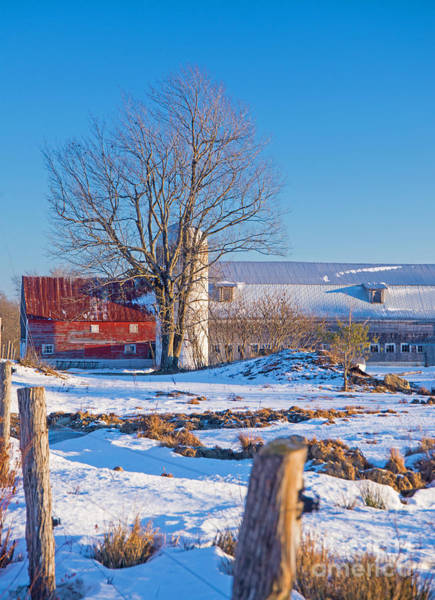 Photograph - Red Barn In Winter by Alana Ranney